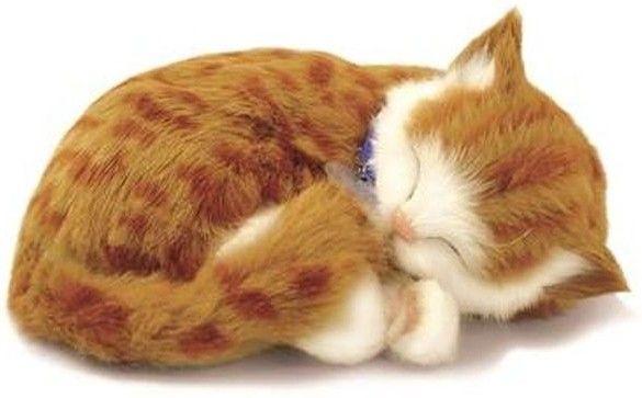 Adopteer je eigen huisdier. De Perfect Petzzz zien eruit als echte huisdieren, door hun zachte vacht en doordat ze lijken te ademen. Ze worden geleverd met een mandje, borstel en certificaat van adoptie. De Perfect Petzzz maken geen geluid en hebben een afmeting van 27 x 17 x 10 cm. Exclusief 1 D batterij. Er zijn verschillende Perfect Petzzz pups en katten verkrijgbaar.   Afmeting: volgt later.. - Perfect Petzzz soft Orange Tabby