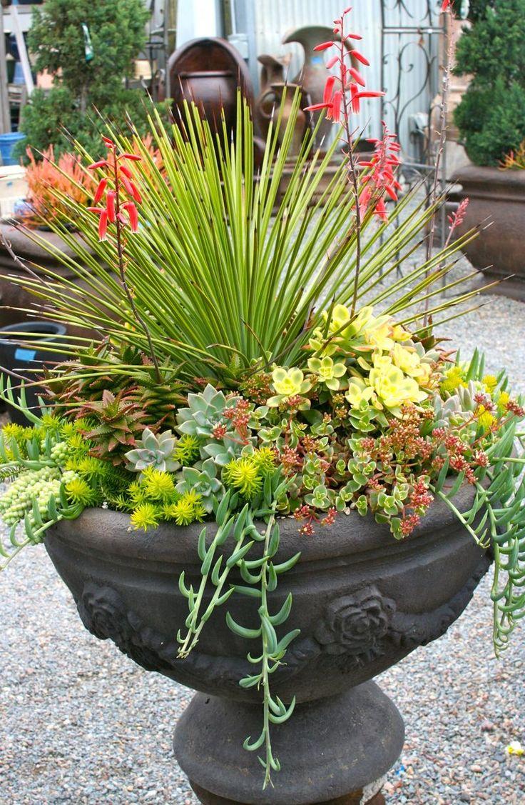288 best Succulent Beauty images on Pinterest   Succulents garden ...