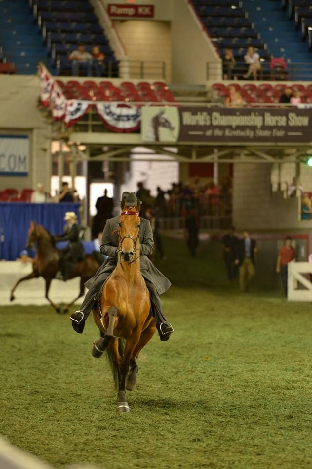 557 Best Saddlebreds Amp Saddleseat