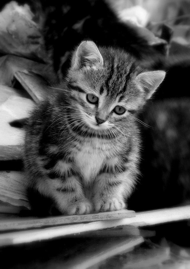 Pin By Brad Parcells On Black White In 2020 Cute Cats Kittens