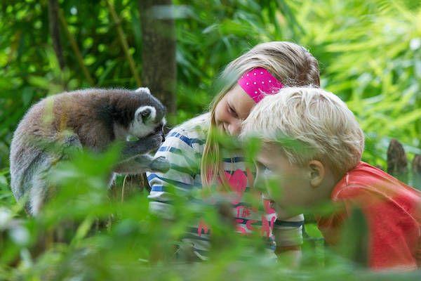 https://www.fijnuit.nl/blog/dierentuinen-met-korting-die-je-gezien-moet-hebben Dierentuinen stunten met hun prijzen. Profiteer van 13 dierentuinen met korting!