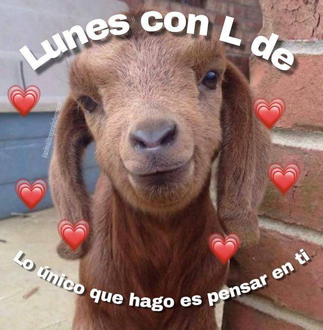 Meme Meme Meme De Amor Memedeamor Tags Memehilarious Memefunny Memebrasileiros Memefaces Memepa Frases Mananeras Frases Tontas Animales Frases