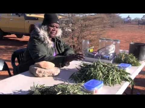 (20) Cultural & Healing Project - Bush Medicine - YouTube