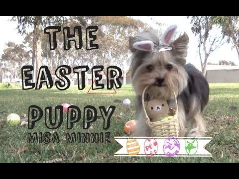 Misa Minnie Doggy Carwash - YouTube