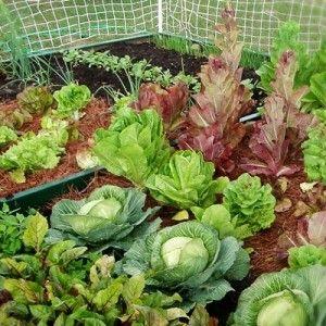 Társítások: Öt hasznos tipp a termelékeny, vegyszermentes kert kialakításához.