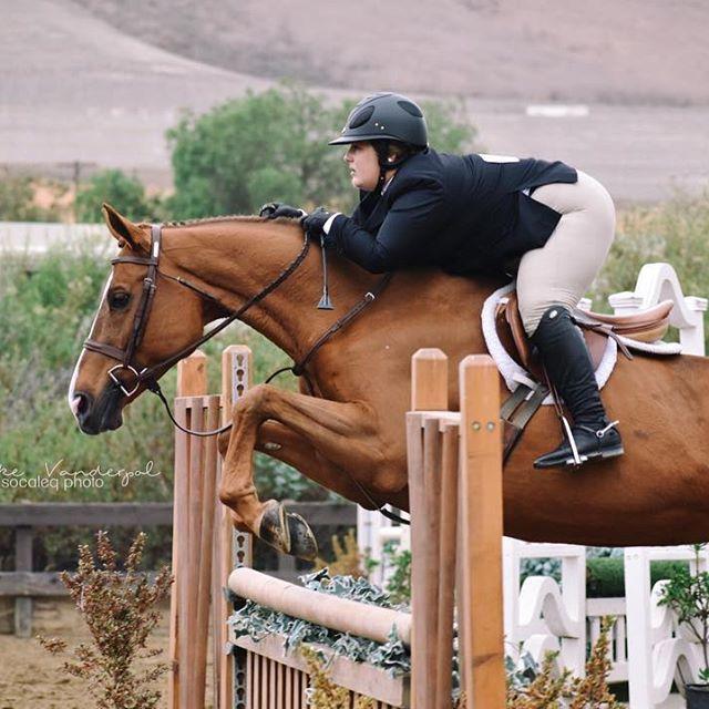 4946 Best Hunter Jumper Images On Pinterest