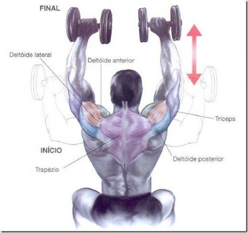 Como Fazer Desenvolvimento Arnold para Hipertrofia