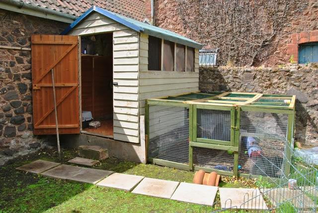 35 best images about amazing rabbit setups on pinterest for Amazing rabbit cages