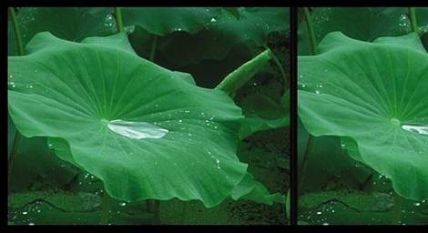 """Imagen de la exposición """"Por su propia naturaleza"""" de Zhao Liang. En Gao Magee Gallery hasta el 31 de julio de 2012"""