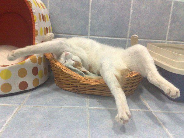 Katten kunnen in de meest rare posities slapen... Dat bewijzen de volgende foto's! #1