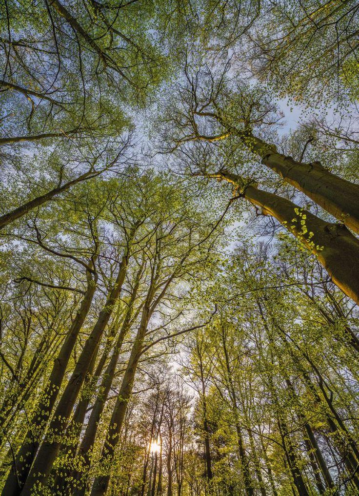 Los árboles en las que es bueno para relajarse en un ambiente tranquilo y desconectar. Contacta con nosotros al 951 081 159, vía email info@bricotiendas.com o visita nuestra tienda especializada en papeles pintados www.papeles-pintados.es.
