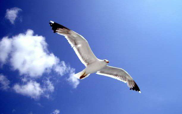 Ο γλάρος Ιωνάθαν πετούσε για τη χαρά του πετάγματος