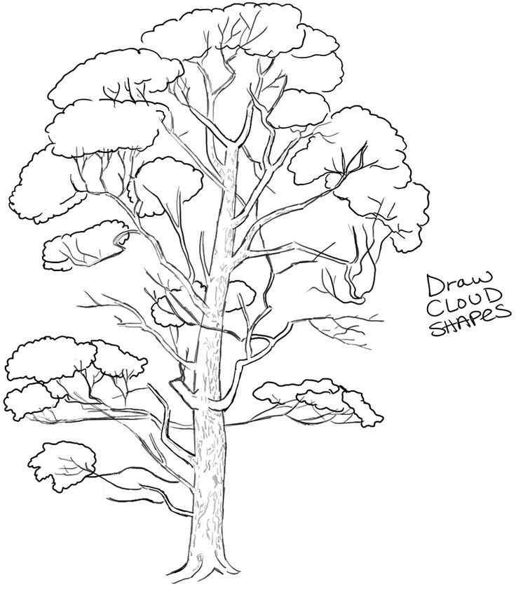 How To Draw Trees Drawing Realistic Trees In Simple Steps