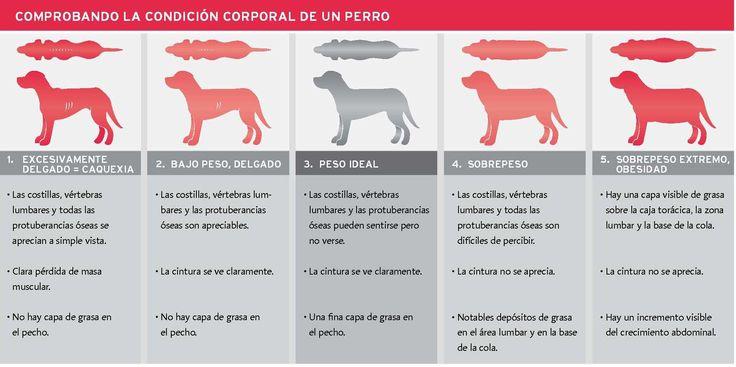 La alimentación baja en calorías para perros y gatos, opción completa y equilibrada en planes de reducción de peso.