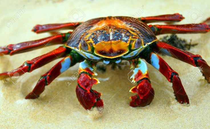 263 best crabs images on pinterest crabs marine life for Ankers fish fry