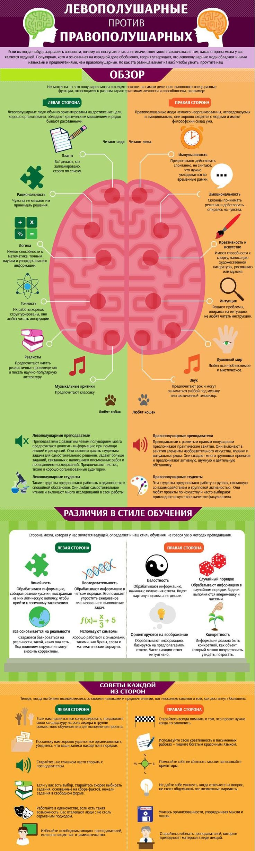 инфографика мозг