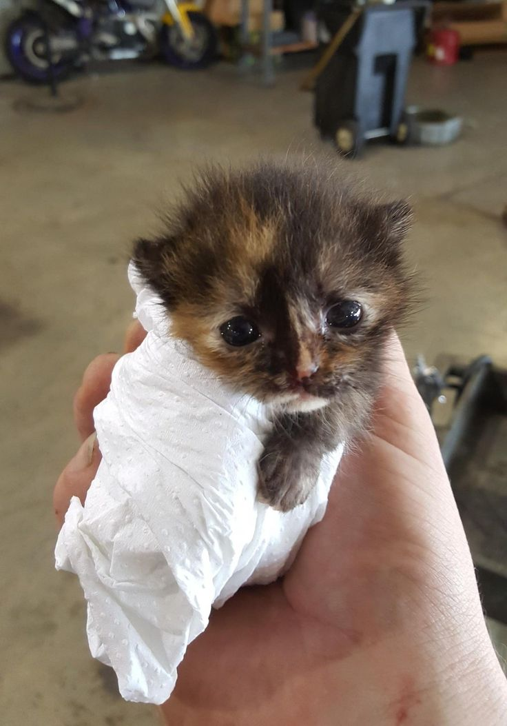"A man found a tiny newborn kitten while he was working on a car. ""We are best friends now.""Meet little Moogy and her rescuer Kyle!KyleIt was a Saturday at an automative repair shop in Houston, Kyle was working on a car when suddenly he discovered the tiniest little furry creature he had ever seen. ""..."