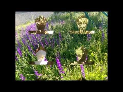 Bahçemden Güzel Çiçekler Sizlere Gelsin Beğenisiz ve Yorumsuz Bırakmayın...