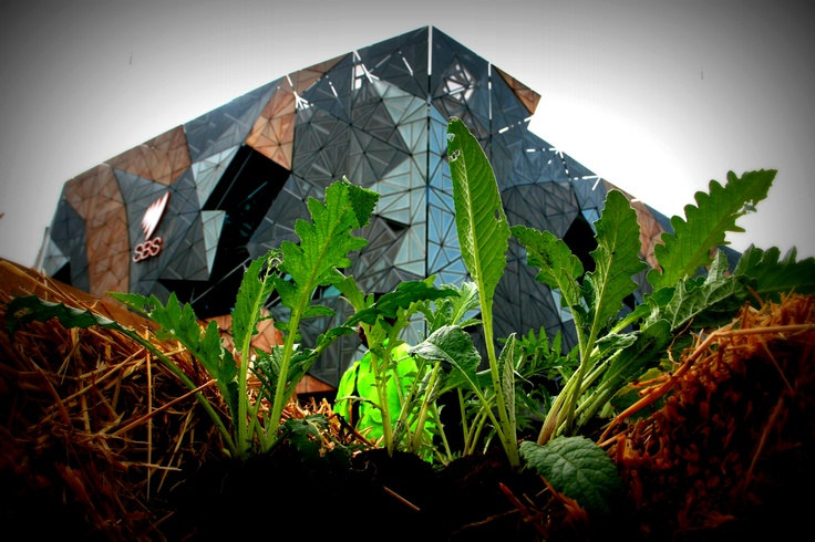 Greening of Federation Square