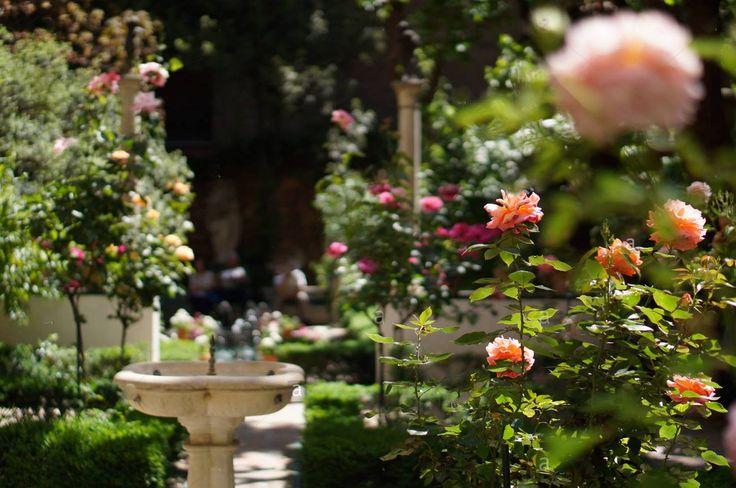 Jardim de rosas do Museu  Sorolla  em Madrid, Espanha.  Criado a pedido da viúva do pintor Joaquín Sorolla, Clotilde García del Castillo, que em 1925, deixou em testamento todos os seus bens ao Estado espanhol para fundação de um museu em memória do seu marido.   Em 28 de março de 1931 foi aceito o legado da viúva do pintor. O Museu ocupa a antiga casa do pintor e foi inaugurado em 1932.