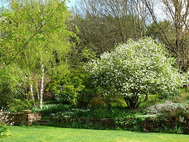 Edna Walling loved hardy, old-fashioned perennials, shrubs and flowering trees and these thrive in Kiloren.