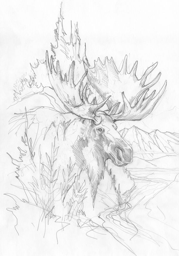 Bergsma Gallery Press :: Paintings :: Originals :: Original Sketches :: 2014/Moose - Original Sketch