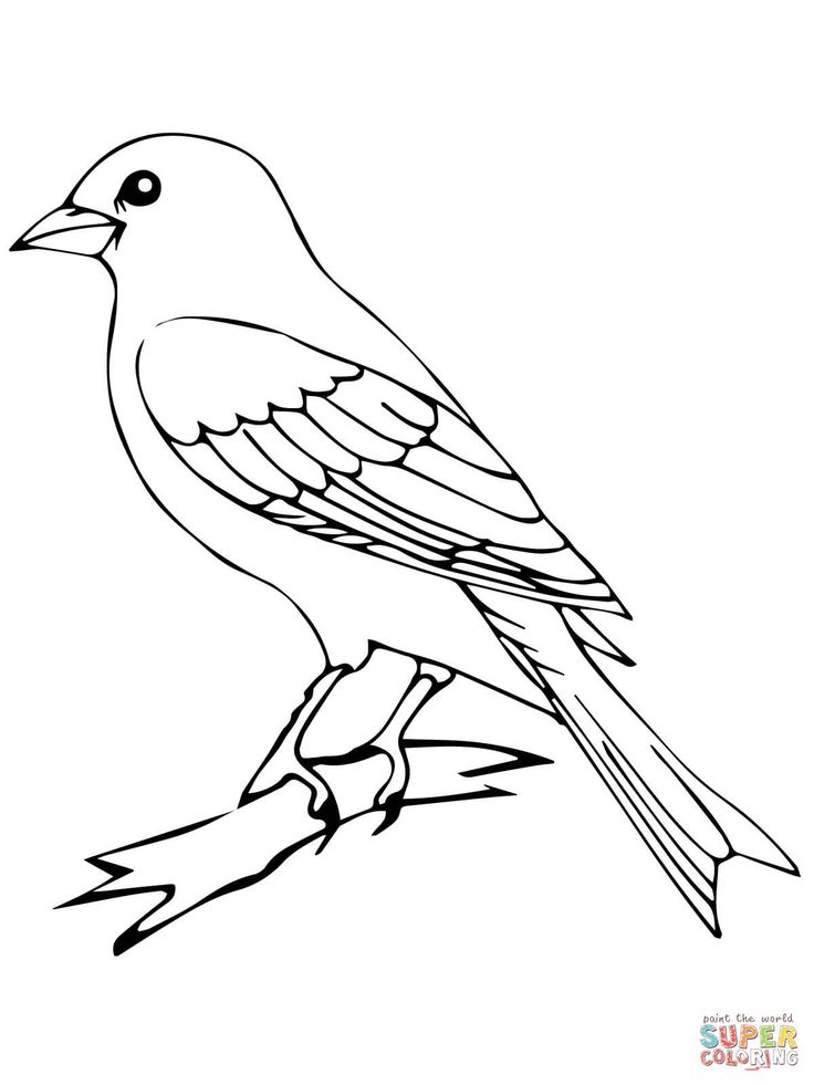 Quail Pictures Coloring Pages
