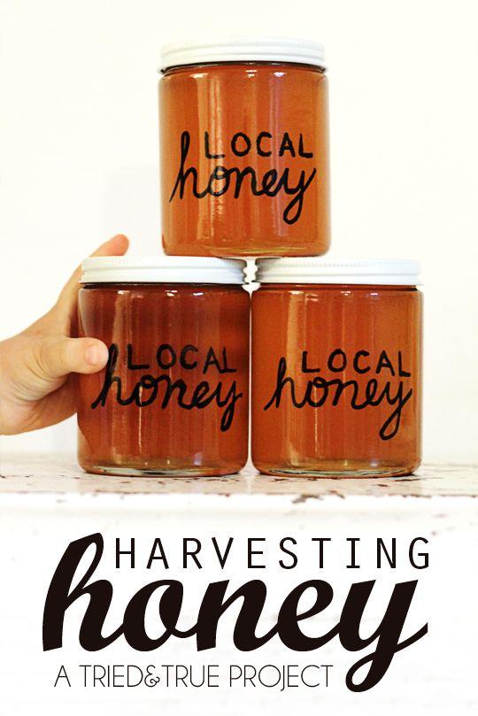 Harvesting Honey on the Cheap! #beekeeping #homesteading