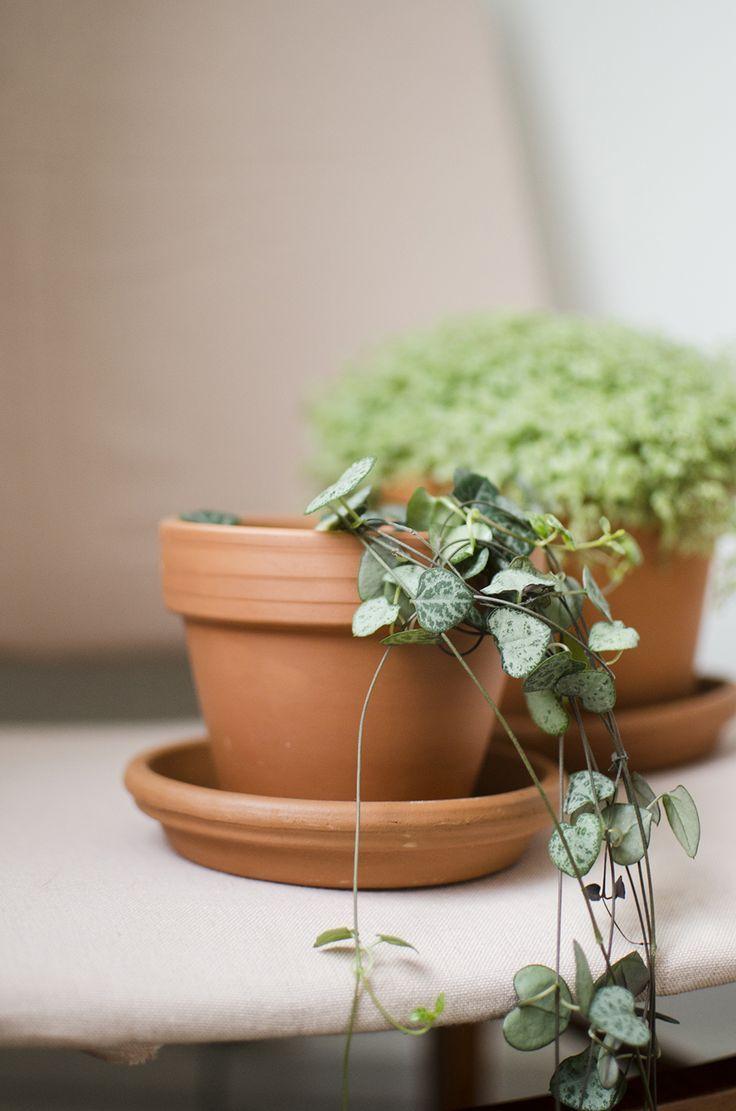 les 21 meilleures images du tableau j 39 aime la terre cuite sur pinterest jardinage terre cuite. Black Bedroom Furniture Sets. Home Design Ideas