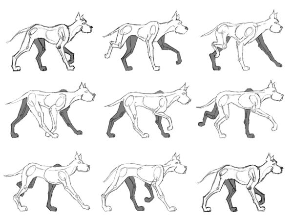 Animating a Quadruped ✤ || CHARACTER DESIGN REFERENCES | キャラクターデザイン | çizgi film • Find more at https://www.facebook.com/CharacterDesignReferences & http://www.pinterest.com/characterdesigh if you're looking for: bandes dessinées, dessin animé #animation #banda #desenhada #toons #manga #BD #historieta #sketch #how #to #draw #strip #fumetto #settei #fumetti #manhwa #cartoni #animati #comics #cartoon || ✤