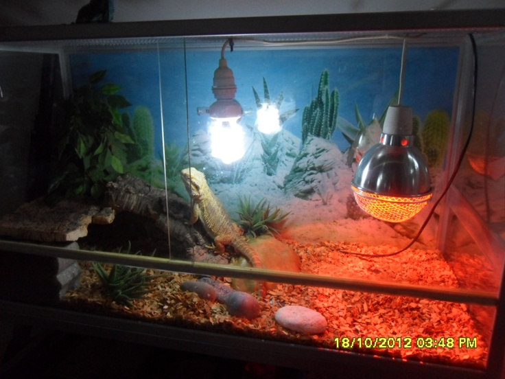 a good cage to the bearded dragon :-)