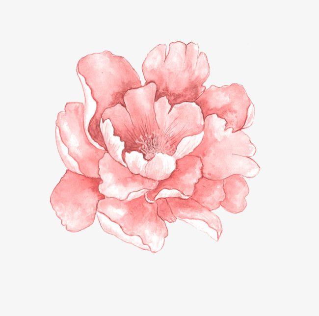 A Peony Flower Flower Art Pink Watercolor Flower Watercolor Flowers