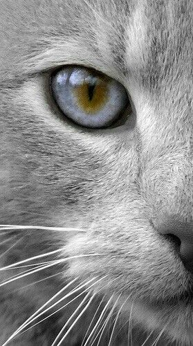 Beautiful cat eye - schitterend kattenoog