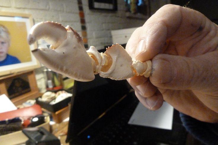 Wim Hofman met krabbenpoot. foto: Marja Geerse