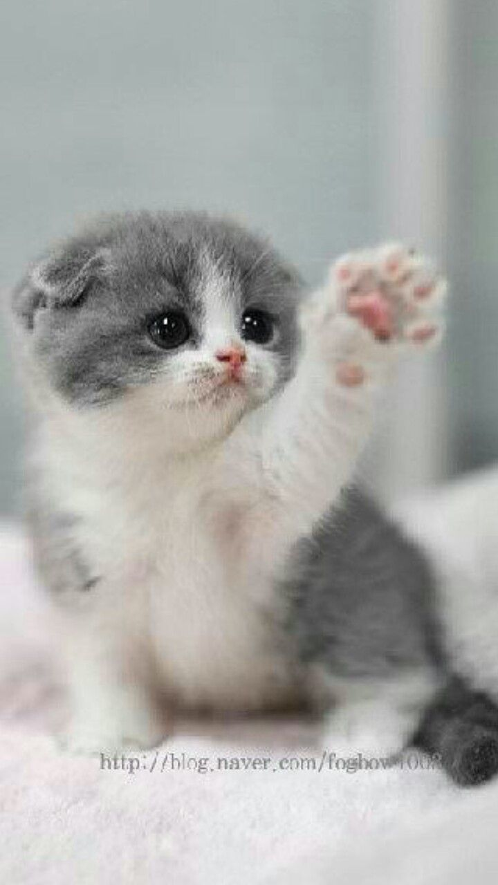 73 best katty images on pinterest animals kitty cats and