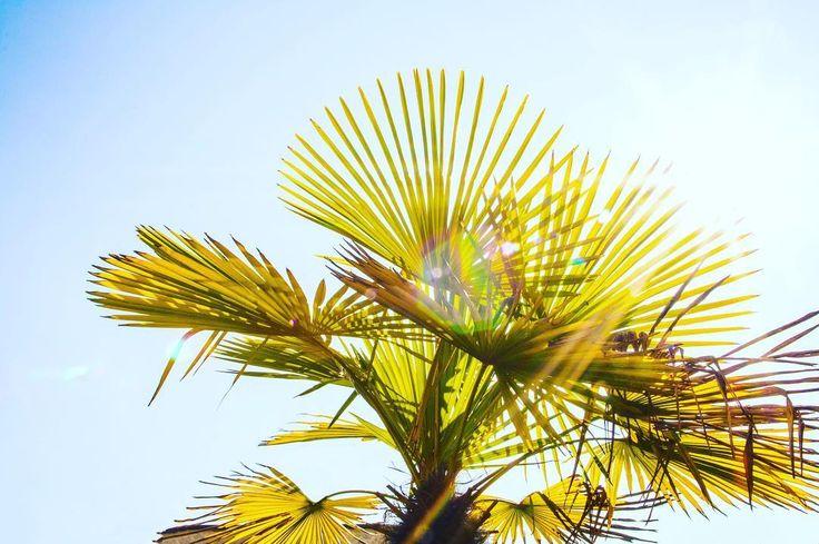 Sunny #vsco #city #sunny #nature