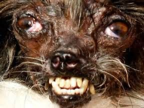 Los Animales Mas Feos Del Mundo Pictures to Pin on Pinterest - PinsDaddy