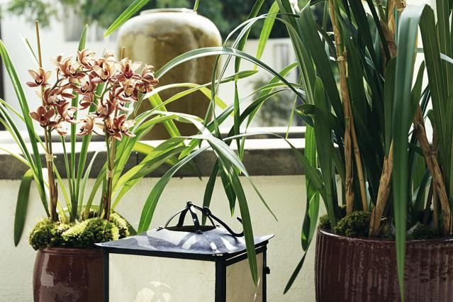 how to grow orchids indoors tips