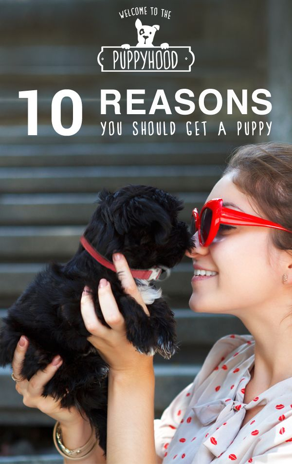 Adopting a puppy isn't easy. Raising your little guy (or girl!) requires a lot of time and money, but the reward of becoming a puppy parent is far greater than the cost of a few poops on the carpet. Check out this list of the 10 reasons why you should add a puppy to your life! https://puppyhood.com/articles/1422/10-reasons-you-should-get-a-puppy/1366