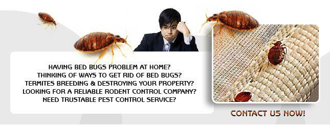 exopest pest control solutions