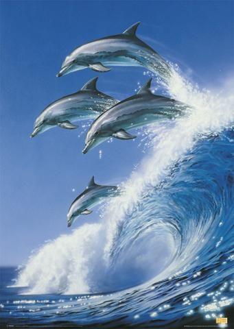 delfini put