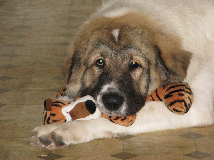 I love my plush tiger toy