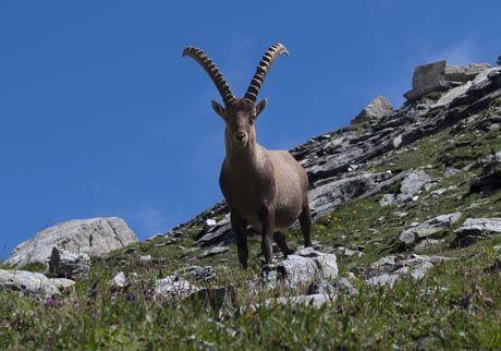 Incontri ravvicinati nei pressi del Rifugio Giacoletti. Crissolo, Valle Po, Alpi Cozie (Piedmont OuttaBounds)