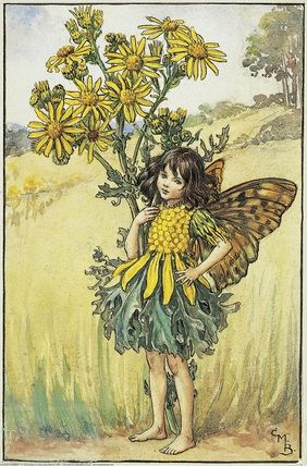 Illustration for the Ragwort Fairy from Flower Fairies of the Summer.   Cicely Mary Barker
