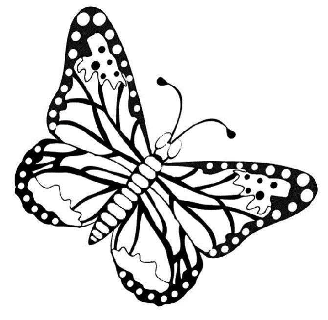 Superb Butterfly Coloring Pages For Kids 98 Butterflies With Large Body
