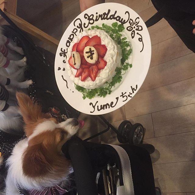 本日はたくさんのパピヨンちゃん達に集まって頂きました! お店が始まって1番ワンコがいたかもです😍 みんないい子で可愛かったです!! そしてワンちゃん用ののお誕生日ケーキもみんなで食べましたよ〜! Yumeちゃんおめでとう!! #cafedining9 #dogcafe #ドッグカフェ #駒沢 #ワンコ #愛犬 #モーニング #ランチ #ディナー #カフェ #ノーリード#わんちゃん#きゅう#ミニピン #ミニチュアピンシャー #わんこなしでは生きていけません会 #トイプードル  #トイプー #看板犬 #イタリアン  #minipin #cafe #morning #lunch #diner #dog #dogs #dogstagram #dogsofinstagram  café dining 9  営業時間  平日 11:00〜22:00 土日祝日 8:00〜22:00 電話番号 03-6450-9993 住所  東京都世田谷区駒沢4-1-22 JCS駒沢ビル 2F スタッフ一同、心よりお待ちしております。