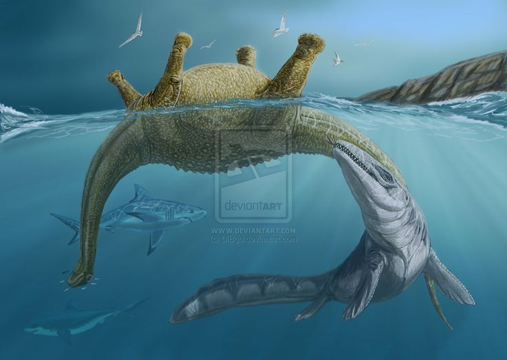 Liodon Late Cretaceous Discovered By Agassiz 1846 Note Originally