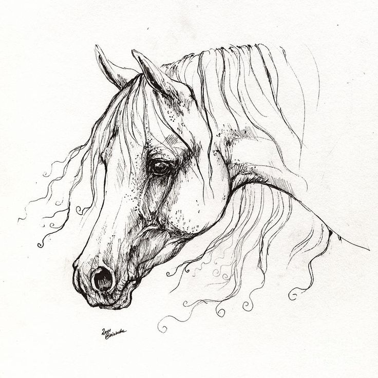 Line Drawing Horse Tattoo : Best images about drawing on pinterest arabian horses