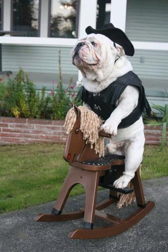 Ride 'em, #Bulldog! ok he is having WAY too much fun to be humiliated ;-) / costumes for dogs