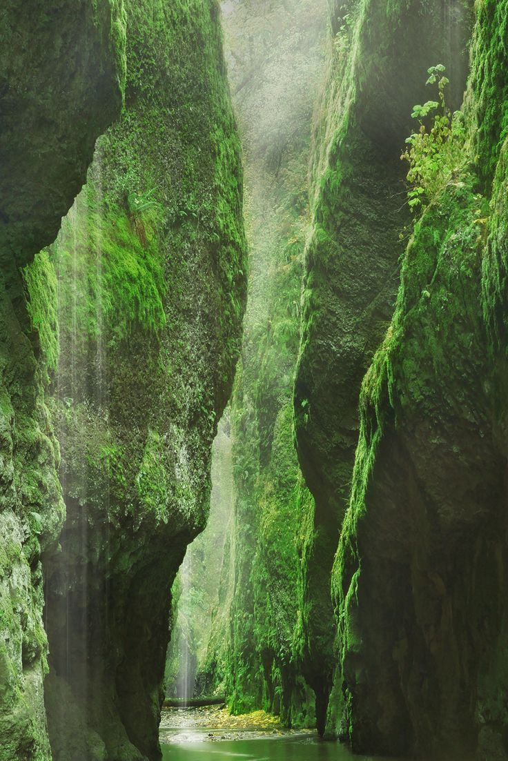 Oneonta Gorge, Oregon. A magical hike in a very shallow stream. #oregon #pdx